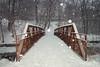 (A Great Capture) Tags: bridge snow snowy winter toronto nature agreatcapture agc wwwagreatcapturecom adjm ash2276 ashleylduffus ald mobilejay jamesmitchell on ontario canada canadian photographer northamerica torontoexplore l'hiver trees