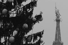 Varda giò... (carlo612001) Tags: milano milan italia italy christmas christmastree madonnina bw bn nb natale 2017 natale2017 madunina ngc duomo duomodimilano milanoduomo architettura architecture building blackandwhite black white nebbia fog foggy