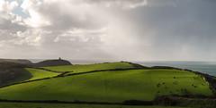 Boscastle meadow (Tim Ravenscroft) Tags: meadow field coast boscastle cornwall hasselblad hasselbladx1d x1d