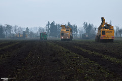 Warriors (martin_king.photo) Tags: sugarbeetharvestxxl sugarbeet sugarbeetharvest ropa ropatiger ropatiger6 sugarbeetharvester snow white whitefield cold coldday workeveryday tschechischerepublik powerfull martinkingphoto machines strong agricultural greatday great czechrepublic welovefarming agriculturalmachinery farm workday working modernagriculture landwirtschaft machine machinery winter winterwork sugarbeetcampaign2017 campaign sugarbeetcampaign challengermt875b tractractor haweruw4000 sugar beet field transfer trailer