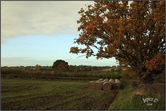 Back Catalogue.. (Picture post.) Tags: autumn hdr fields strawbailes clouds sky trees oak landscape nature green paysage arbre