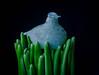 Bird in nest (frankmh) Tags: glass artglass bird ceramics vase hittarp sweden indoor designer oivatoikka