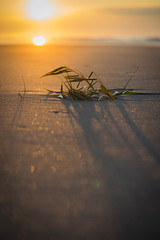 Weathering, Together (JeffMoreau) Tags: weathering together macro dof depth field beach north myrtle horry county south carolina kelp sand sony a7ii 90mm