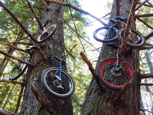 Unicycle tree