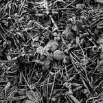 Winter . Verulamium .  (M9 Monochrome MS optical 50mm 1.1 ) thumbnail
