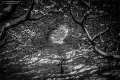 Light at the end of the tunnel (Ian Garfield - thanks for almost 2 million views!) Tags: cannock chase chasewater robin snow december nature ian garfield photography canon