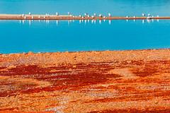 Orange and Teal (ashercurri) Tags: nature birds animals lake orange teal blue landscape seascape water sony nex nex7 kerr north carolina