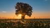 Jahresrückblick - Juli (raschmichael) Tags: leegebruch morgens nebel oberhavel sonnenaufgang