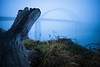 foggy sauvie-8 (sebboh) Tags: carlzeisscontaxg28mmf28biogon sonya7kolariut zeissrokkorfrankenlens stump tree bridge sauvieisland portland oregon pdx landscape fog mist dusk