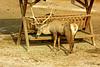 IMG_3179_copy (sinanaydin.net) Tags: eskişehir park hayvanat bahçesi zoo sazova animal
