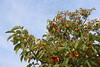 Chonsam cooperative farm (Timon91) Tags: dprk north korea democratic peoples republic noordkorea noord nordkorea 조선민주주의인민공화국 kim juche chosun communism