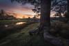Poza (Asturias, Spain) (Tomasz Raciniewski) Tags: navia asturias tree sky clouds sunset landscape d7200 1020 wide grass park pond pool spain poza green