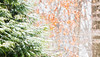 Snowy morning (peggypryor68) Tags: december 2017 evergreen winter trees green potd 12302017 cold cy365 bokeh snow