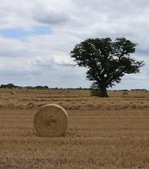 Harvest snapshot (Lexie's Mum) Tags: walk walking nature countryside warwickshire
