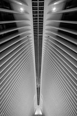 The Oculus (dansshots) Tags: oculus theoculus dansshots nikon nikond750 rokinon rokinon14mm bnw blackandwhite blackandwhitephotography blackandwhitephoto modernarchitecture architecture architectureofnewyorkcity newyorkcity nyc newyork