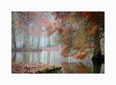 Brumes Foret de Rambouillet-3874 (helenea-78) Tags: arbres brumes forêt forêtderambouillet rambouillet refletssurleau trees eau reflets arbre mousse feuillesmortes automne