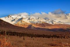 Last Days of Autumn (Dan King Alaskan Photography) Tags: autumn fall denalinationalpark alaska scenic canon50d sigma2470mm