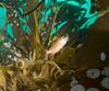 ML061723.jpg (alwayslaurenj) Tags: montereycarmel pointlobos youngoftheyearrockfish