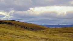 PAMPA (Berly Fuster [Theretsuf]) Tags: pampa montaña cerro cielo nublado nubes vegetación paisaje pampas montana hill heaven cloudy clouds vegetation landscape berg hügel himmel bewölkt wolken landschaft kevinncajaleon kevin berly fuster