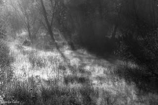 Nieblas en el Pantano