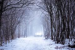 Snowy path... (http://www.paradoxdesign.nl) Tags: hilversum gooi snow pat forest path pad fence hek winter landscap landscape trees light holland netherlands het