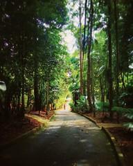 Taman Botanikal, Ayer Keroh - Melaka - http://4sq.com/s1fAIm #green #nature #tree #grass #travel #holiday #holidayMalaysia #travelMalaysia #Asian #Malaysia #Malacca #大自然 #草 #树木 #旅行 #度假 #马来西亚旅行 #马来西亚度假 #亚洲 #马来西亚 #发现马来西亚 #自游马来西亚 #马六甲 #park #公园