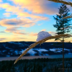 """I've put my hat on"", says the Straw with a View ❄ (evakongshavn) Tags: 7dwf flora straw snow tiny tinytreasures tinytreasuresinflora view fjord fjords fjordsofnorway waterscape sunlight skyandclouds skyline skyandsunset skyscape light yellow white blue mountains mountain cloud clouds cloudporn beautiful freshair landscapephotography landscape landschaft earthnaturelife naturnature natur naturelovers naturerocks nature naturphotography natureart beautyinnature naturbilder naturescape naturelover naturelandscape naturephotography fantasticnature naturaleza naturescenes scenery serene winter winterwonderland winterwald winterlandscape winterhasarrived macroshot macrounlimited macro magic makro makroaufnahmen closeup outside outsidepictures outdoors outhiking outdoorsphotography outdoorphotography blahblahscape lifethroughahole"