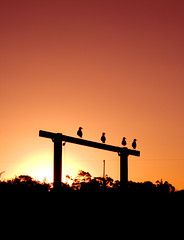 Watching the Sunset (SawardPhotography) Tags: sunset australia bird