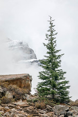 Let There Be Peace on Earth (Kirk Lougheed) Tags: alberta banff banffnationalpark canada canadian morainelake valleyofthetenpeaks autumn fall fog landscape mist mountainside nationalpark outdoor park sky snow spruce tree
