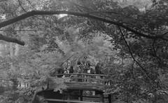 _2020824 (nikosaminira1) Tags: analog film 135format filmcamera filmphoto filmphotography analogphotography selfdevelopment caffenol bw apx100 agfaapx100 agfa adox polo1 radionar schneiderkreuznach 45mm28