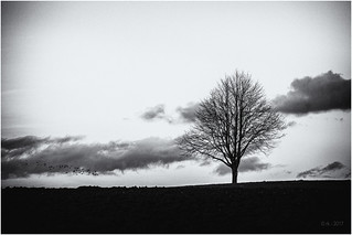 Approaching a small Tree...