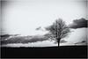 Approaching a small Tree... (Ody on the mount) Tags: anlässe bäume em5ii filmkorn fototour himmel omd olympus pflanzen rahmen schwäbischealb silhouette tiere vögel wolken bw clouds monochrome sw sky trees vintage römerstein badenwürttemberg deutschland de