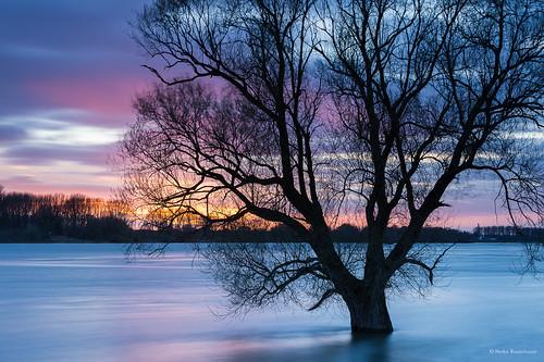 Rheinhochwasser - The river Rhine in flood