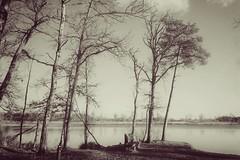 Oisterwijks Ven (Bram Meijer) Tags: oisterwijk kampina meer ven brabant bos bosrand bomen boom