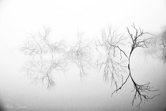Fog Reflection in winter (Peideluo) Tags: fog niebla invierno tree water nature blackandwhite monocromo neblina árbol agua elitegalleryaoi bestcapturesaoi aoi