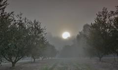 La magia de la niebla (Rafa perena) Tags: amanecer niebla sol naturaleza nature landscapes paisaje magia colores luces misterio arboles campo airelibre sun scenery angular sigma1835 nitidez nikon7100 filtros hitech nd