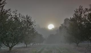 La magia de la niebla