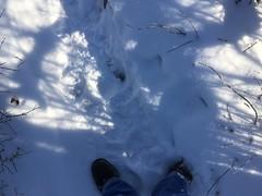 where i stood. december 2017 saganashkee slough (timp37) Tags: where stood saganashkee slough 2017 winter snow december illinois