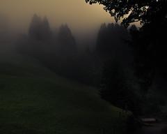 Misty Valley (Netsrak) Tags: europa europe kleinwalsertal baum bäume wald nebel fog mist natur licht weg wiese gemeindemittelberg vorarlberg österreich at
