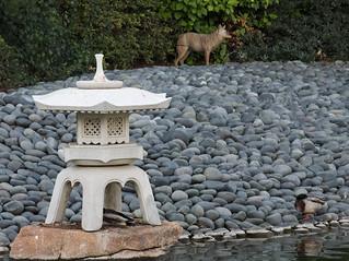 Lantern and wolf statue