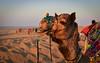 Camel Trekking in The Thar Desert. India (Betty C.H.) Tags: camelsafari camels holidays india jaisalmer rajasthan samsanddunes thardesert travel vacation