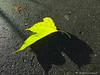 Autumn beauty (Jürgen Kornstaedt) Tags: iphone 6plus colomiers occitanie frankreich fr asphalt