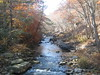 Savage River State Forest (Maryland DNR) Tags: savageriver stateforest westernmaryland garrettcounty fall foliage marylandforestservice forestry fromthetreetops