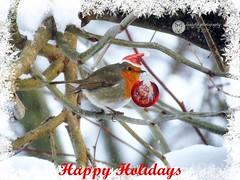 Happy Holidays 🎄🎅☃🔔 (Susyfox) Tags: susyfox seasongreetings christmas nature robin snow