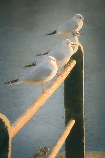 Gulls in the sun