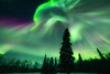 The portal (yan08865) Tags: forest trees winter alaska denali fairbanks aurora borealis lights night sky colors solo travel outdoor snow remote landscapes nighscapes pavlis earth above