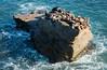 Crowded Rock (Waldemar*) Tags: usa westcoast pacificcoast sandiego lajolla thecove pacificocean rock surf californiasealion zalophuscalifornianus sealion mammal nature california nikon d850 zeissmilvus50mmf14