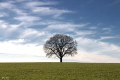 The lonely one (Thijs de Bruin) Tags: tree clouds grass silhouet overijssel leefilter landgoedtwickel