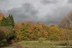 Kleuren (Marjon van der Vegt) Tags: natuur clingsebossen herfst paddenstoelen kleuren bladeren bomen wolken boerderij