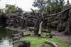 750_9145 (jinkemoole) Tags: japanesemacaque ニホンザル 台北動物園 taipeizoo zoo animal monkey tree